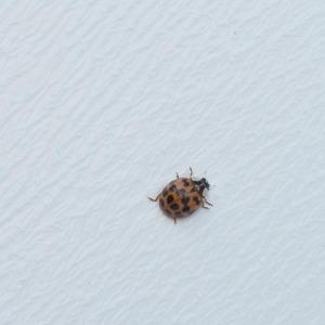 ladybugs-23