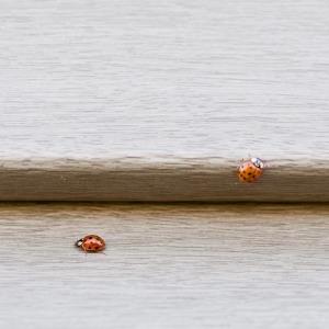 ladybugs-40